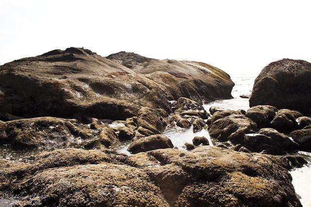 onp_beach6