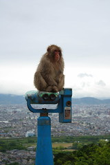 A monkey sitting on binoculars