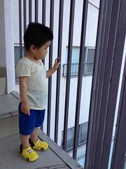 螺旋階段のとらちゃん (2012/9/16)