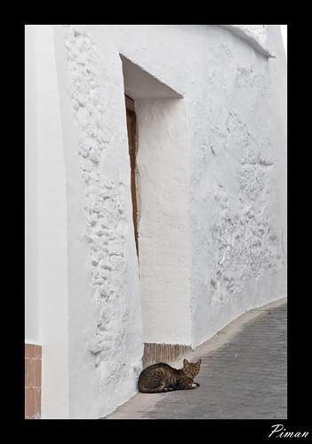 gato en Iznate Malaga