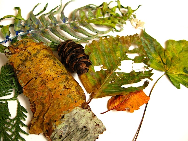 bark, fern frond, pine cone and leaves