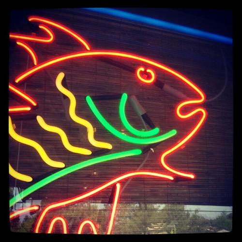 September 28: Neon fish