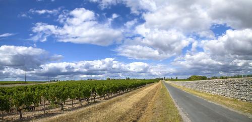comparing poitou-charentes or aquitaine: vineyards