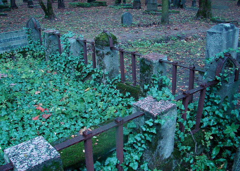 Ivy in the graveyard. by aigarsbruvelis