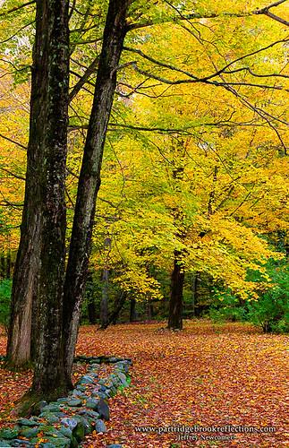 autumn newhampshire walpole wallfall autumncorner