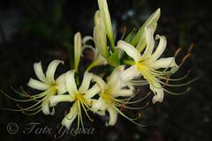 flower20121001-2