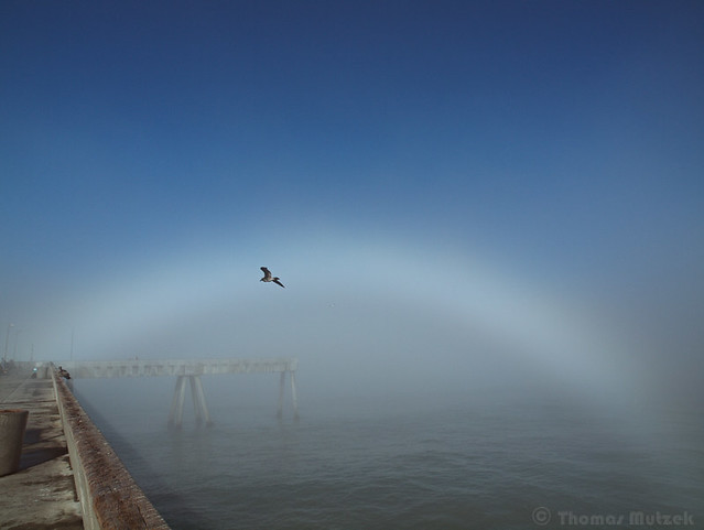 Fogbow, Pacifica