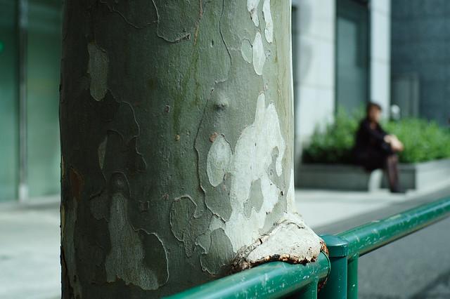 街路樹の幹