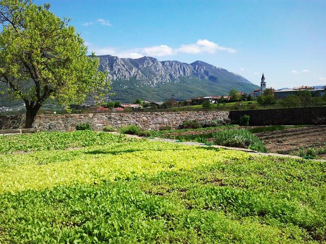 Majerija's garden