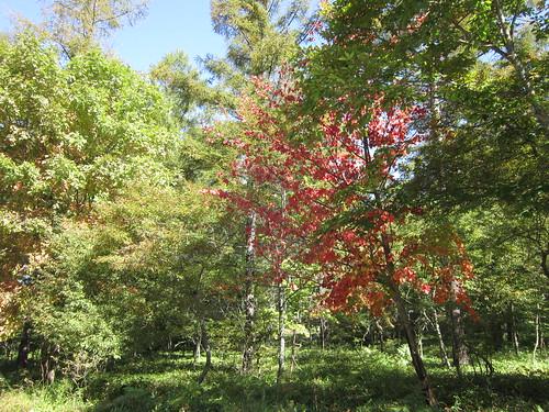 始まった別荘地内の紅葉 2012年10月5日0954 by Poran111