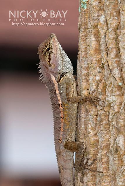 Lizard - DSC_4262