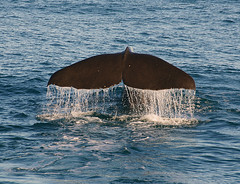 Whale Watch Kaikoura.NZ