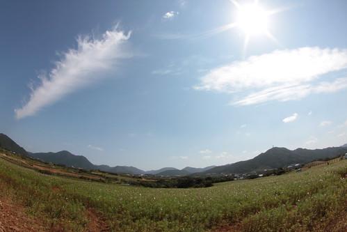 Goyougasaki Park 魚津ヶ崎(ぎょうがさき)公園