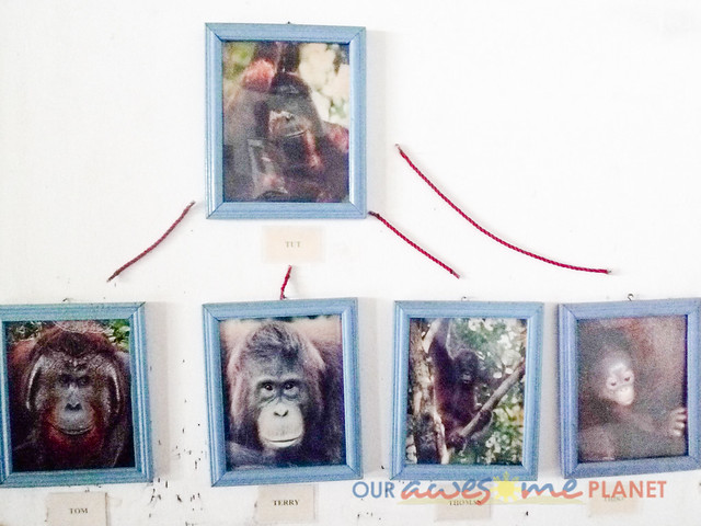 Orangutan World, Tanjung Puting Borneo Adventure-245.jpg