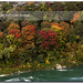 Autumn on the Niagara River