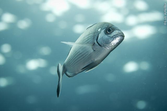 Fish 3456-CR