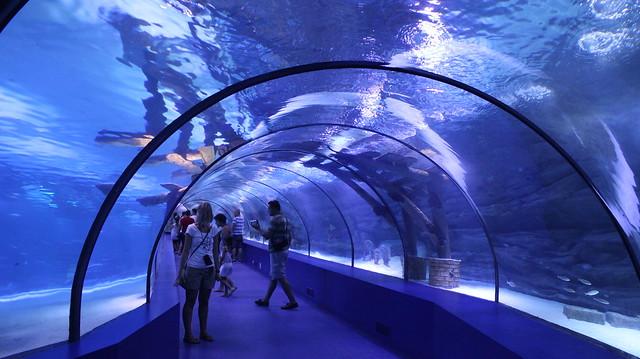 Antalya Aquarium - 24.8.12