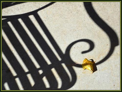 shadow tree fall bench leaf october seasons flickraward nikonflickraward
