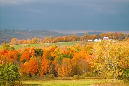 farm hills fallfoliage onondagany