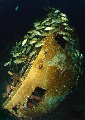 sea fish coral caribbean wreck bonaire ©allrightsreserved mygearandme madaleundewaterimages