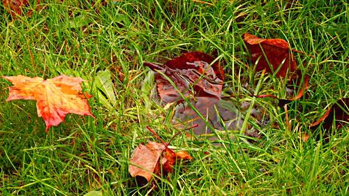 Un charco na herba