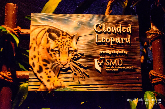 Clouded Leopard by SMU
