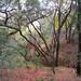 Mission-Peak-from-Sunol-2012-10-21