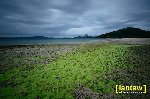 Gloomy sky and seaweed patch