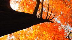 Giant illusion-Tall Trees-Kellie Hastings