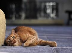[フリー画像素材] 動物 1, 猫・ネコ ID:201210271000