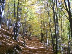 zi de toamnă/autumn day