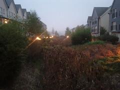 Fog-day 3