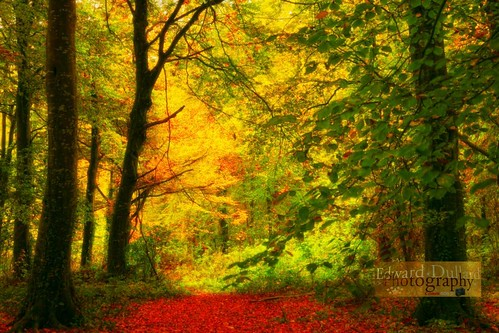 wood autumn kilkenny ireland fall nature forest automne landscape herbst otoño magical enchanted autunna edwarddullardphotographykilkennycityireland