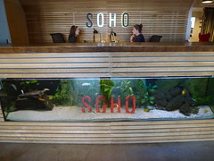 SOHO Reception