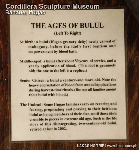 Description on the different ages of the Bululs
