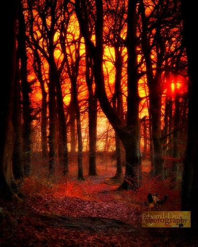 autumn trees ireland light fall nature leaves landscape licht herbst otoño magical emeraldisle enchanted irlanda ierland autunna edwarddullardphotographykilkennycityireland flickrsfinestimages1