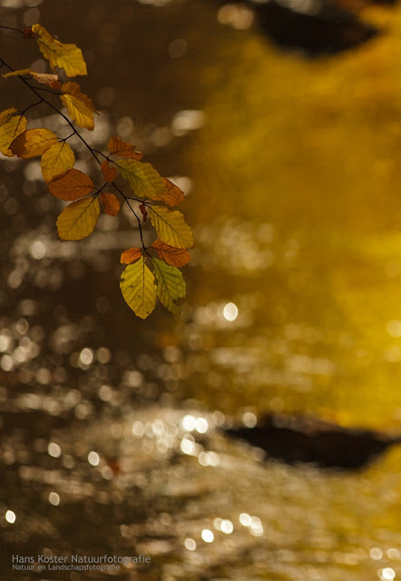 Golden autumn