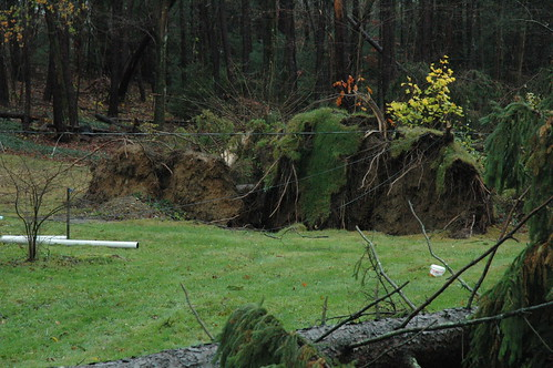 Storm knocks down tree exposing root system in West Milford, N.J. by Jai Agnish
