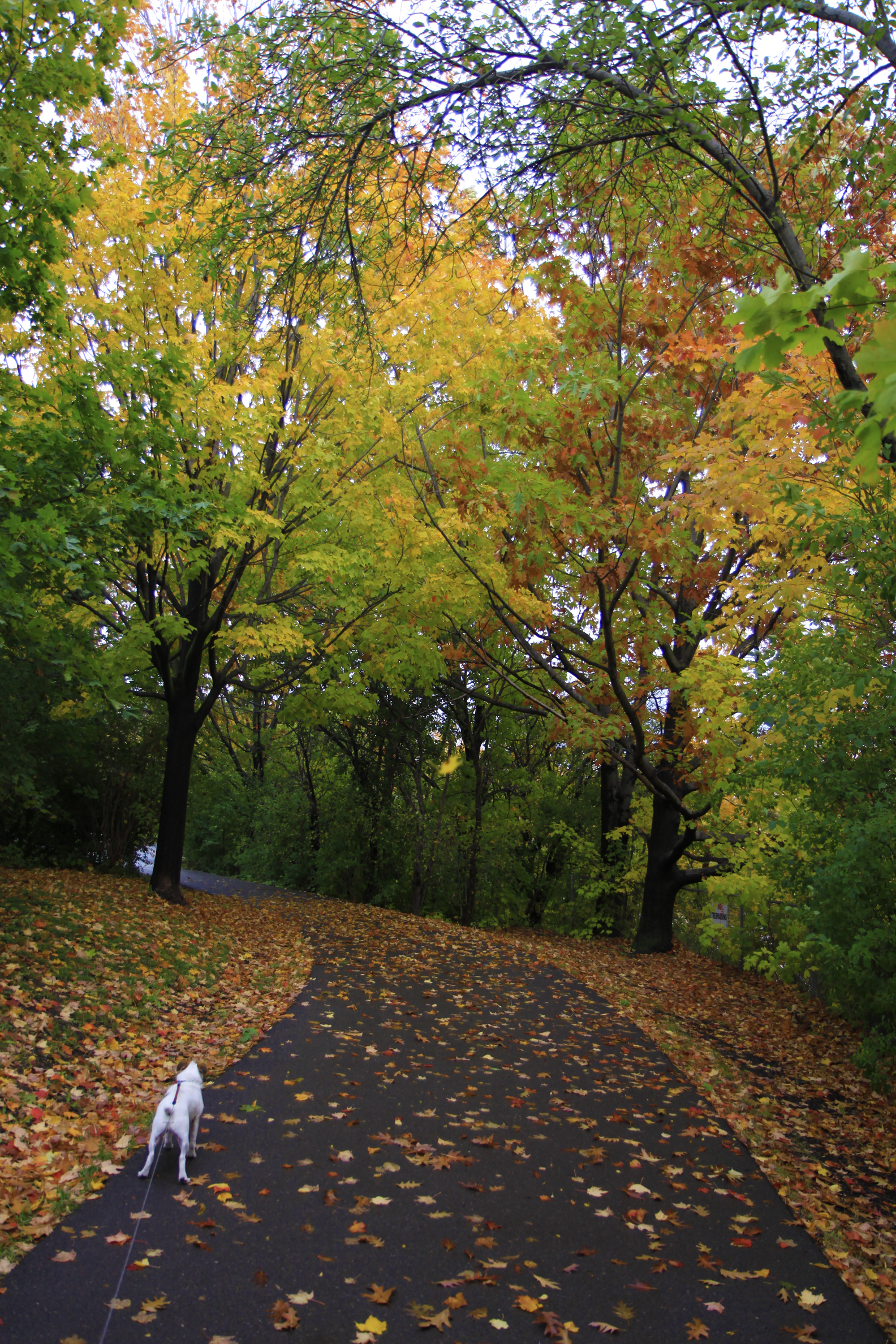 wabukayne park autumn2