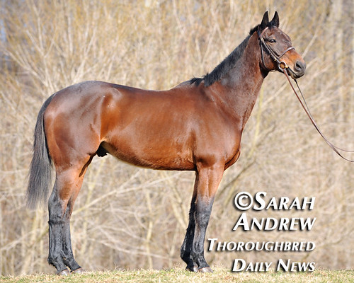 Retired Racehorse Training Project's 100 Day Thoroughbred Challenge: Suave Jazz