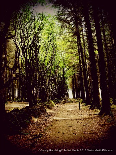 Forest along the Slieve Bloom Way, County Offaly, Ireland
