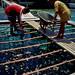 Livelihood in the Cook Islands