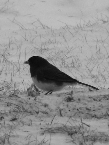 Black and White ~ 1-27-2013