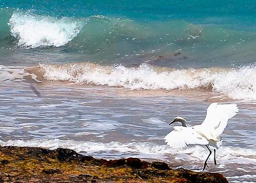 sea bird caribbean bonaire ©allrightsreserved vigilantphotographersunite vpu2 vpu3 vpu4 vpu5 vpu6 vpu7 vpu8 vpu9 vpu10