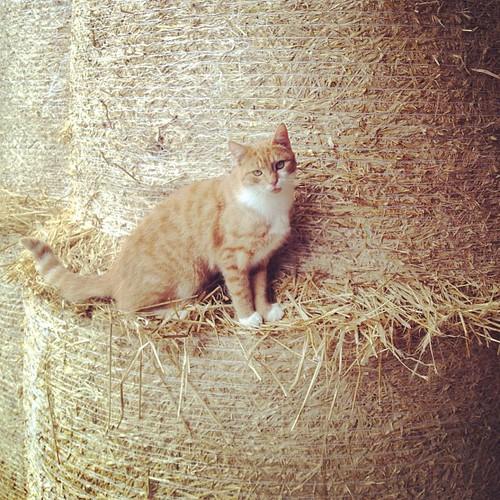 #cat #camouflage