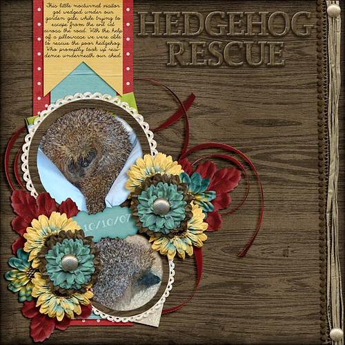 Hedgehog Rescue by Lukasmummy