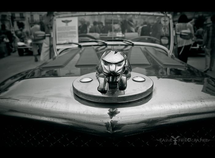 [PHOTO] Un jaguar dans le moteur