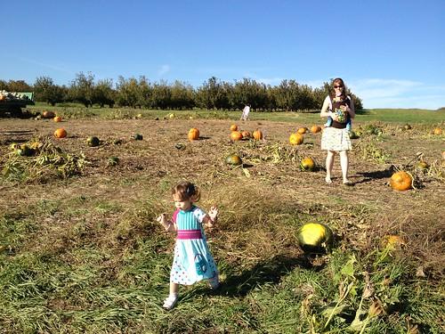 Picking Pumpkins at Eckerts