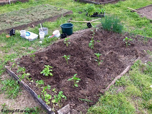 Planting peppers, basil, chives, and parsley seedlings in the kitchen garden, April 2012 - FarmgirlFare.com