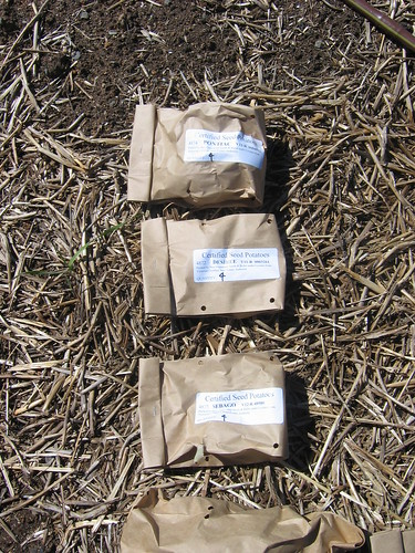 Planting potatoes - Spring 2012